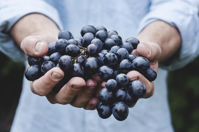 Økologisk frugtordning til din virksomhed fra frugtkurven.dk
